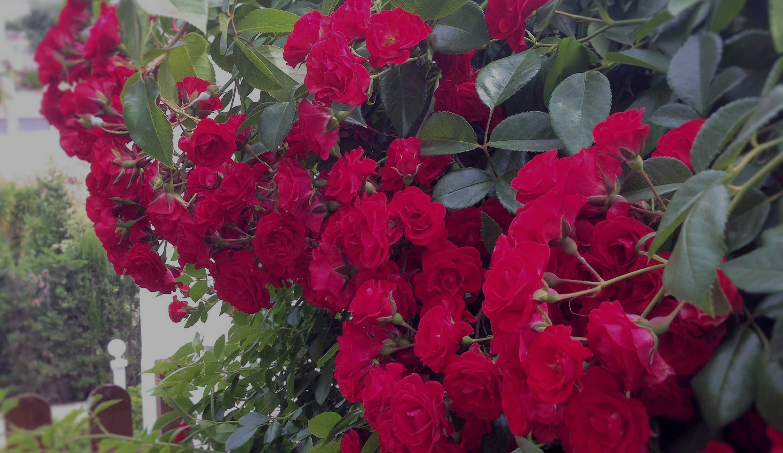 Portada-jardineria1